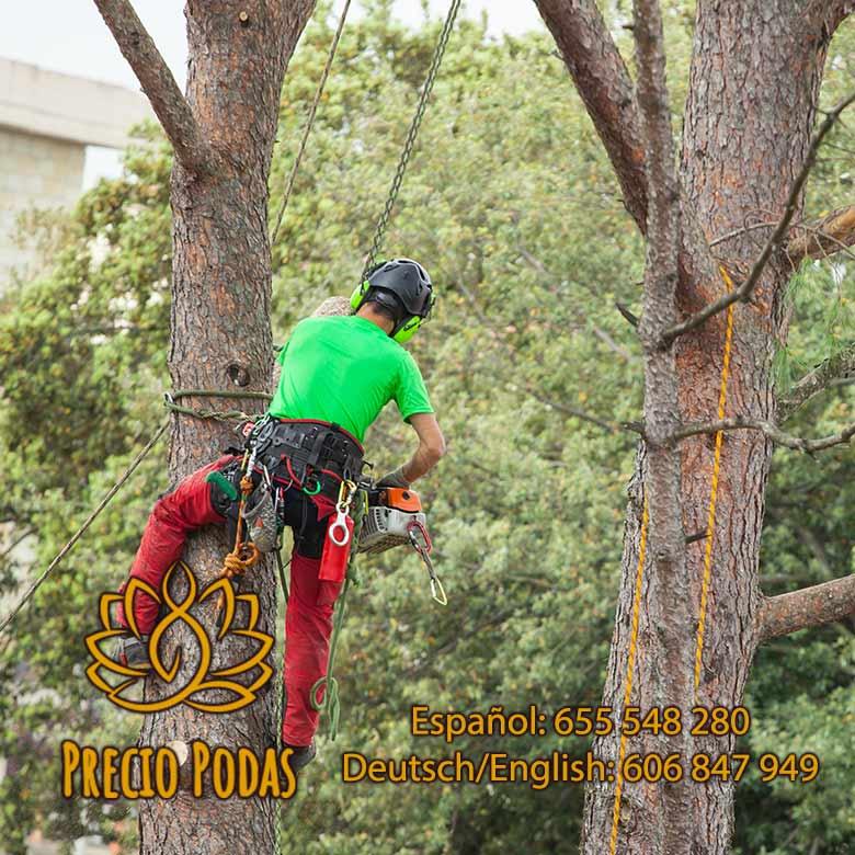 Podas de árboles Alicante y Valencia